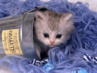 Pisica Se Ascunde