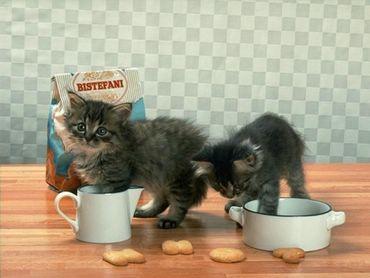 Doua Pisici La Masa