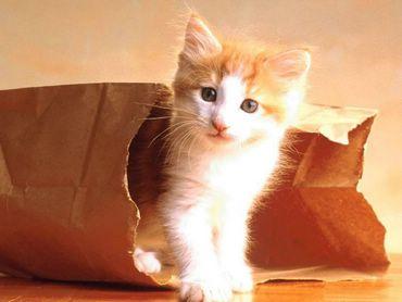 Pisica Din Punga
