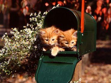 Doua Pisici In Cutia Postala