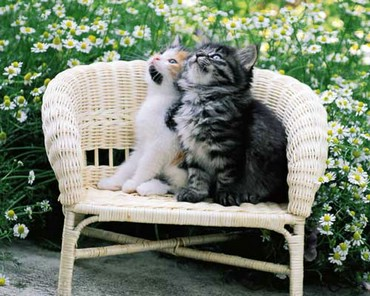 Doua Pisici Pe O Banca