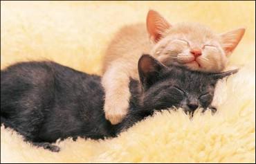 Doua Pisici Iubarete