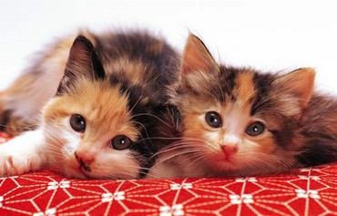Patru Ochi De Pisica