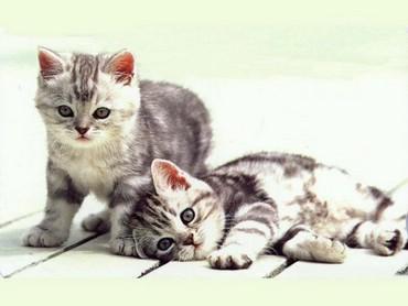 Doua Pisici Pe Dusumea