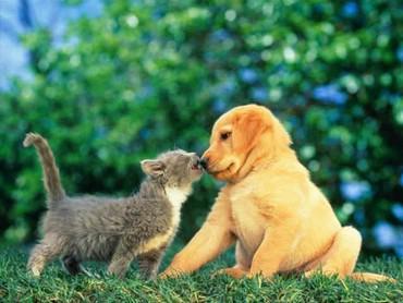 Pisica Si Catelul
