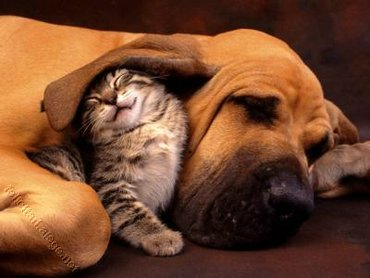 Prieteni Catel Pisica