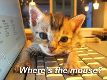 Wheres The Mouse