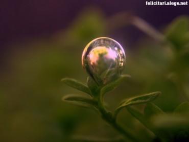 Bubble on plant