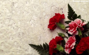 Carnation Decor
