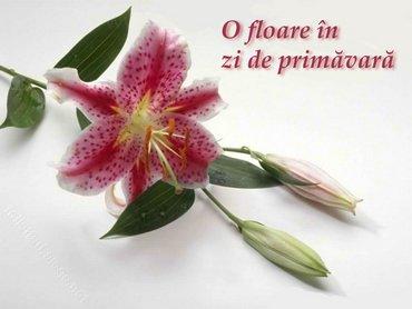 Floare In Zi De Primavara