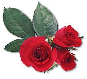 Trei Trandafiri Cu Frunze