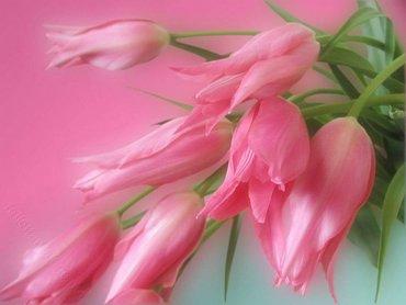 Flori Lalele