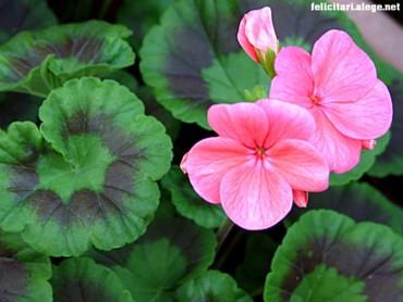 Garden Pretty