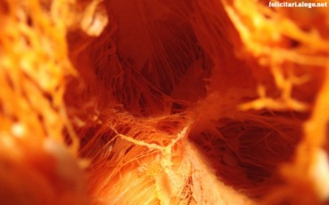 Inner pumpkin