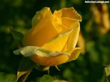 Rose Of Gelosy