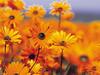 Vista garden flowers