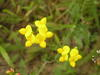 Yellow flowers #4