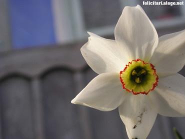 White flower #3