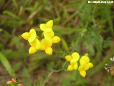 Yellow flowers #4