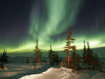Auror Winter
