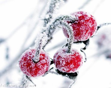 Frozen fruits in winter
