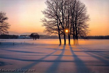 Iarna Printre Copaci