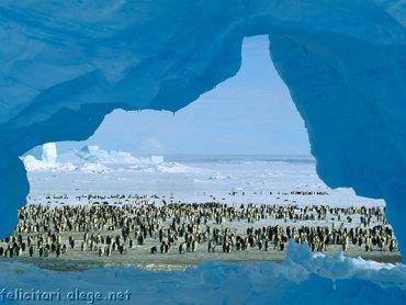 Pinguini Iarna