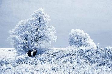 Copacii Iarna