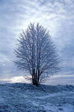 Singur In Iarna
