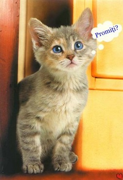 Promiti?