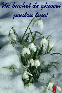 Snowdrops for you!