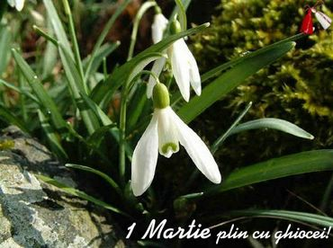 1 March with snowdrops!