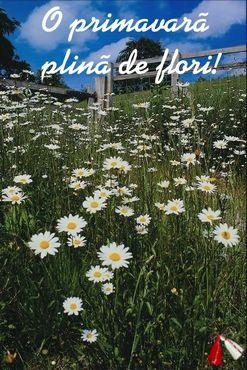 O primavara plina de flori