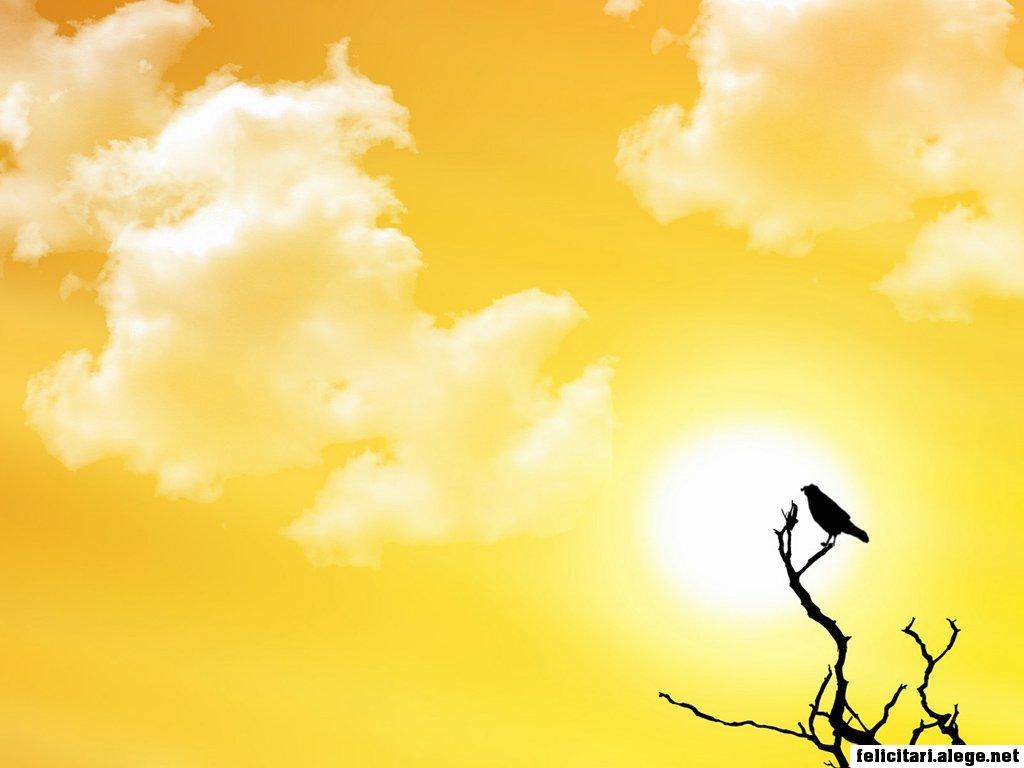 Sunset And A Bird