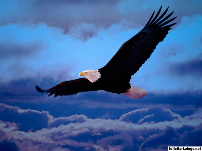 Blad Eagle Freedom Wings
