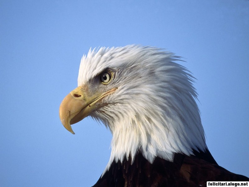 Eagle Looking Ahead