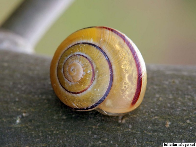 Snail On A Tree Bark