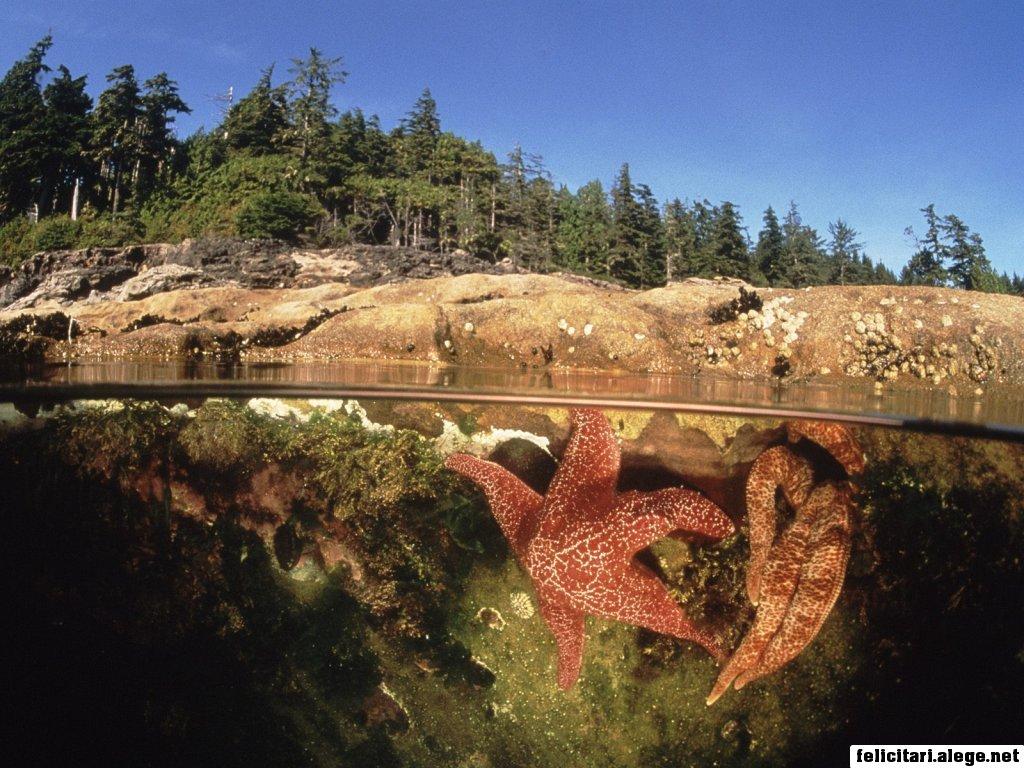 Starfish In A Tide Pool Canada