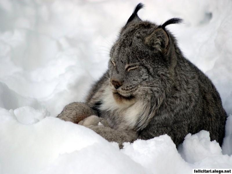 Winter Nap Cat