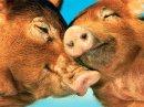 Animals 09