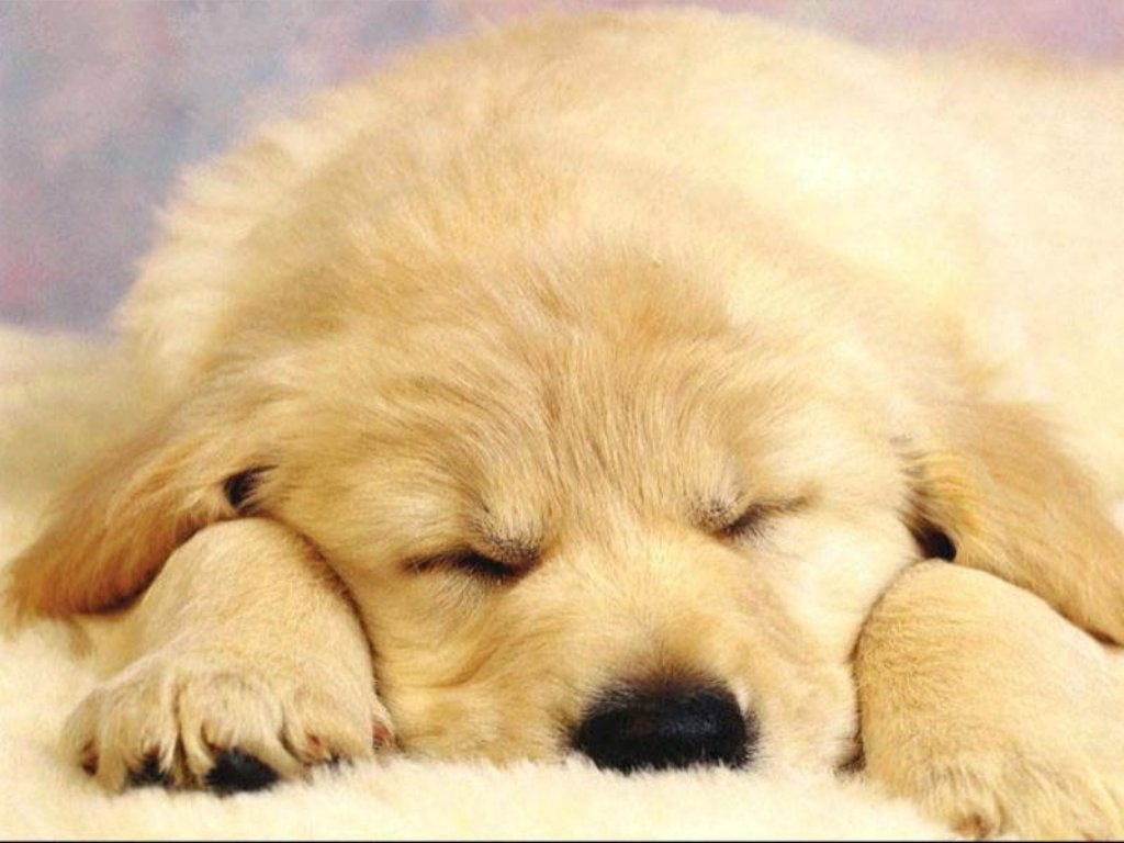 Dogs & Puppies 01