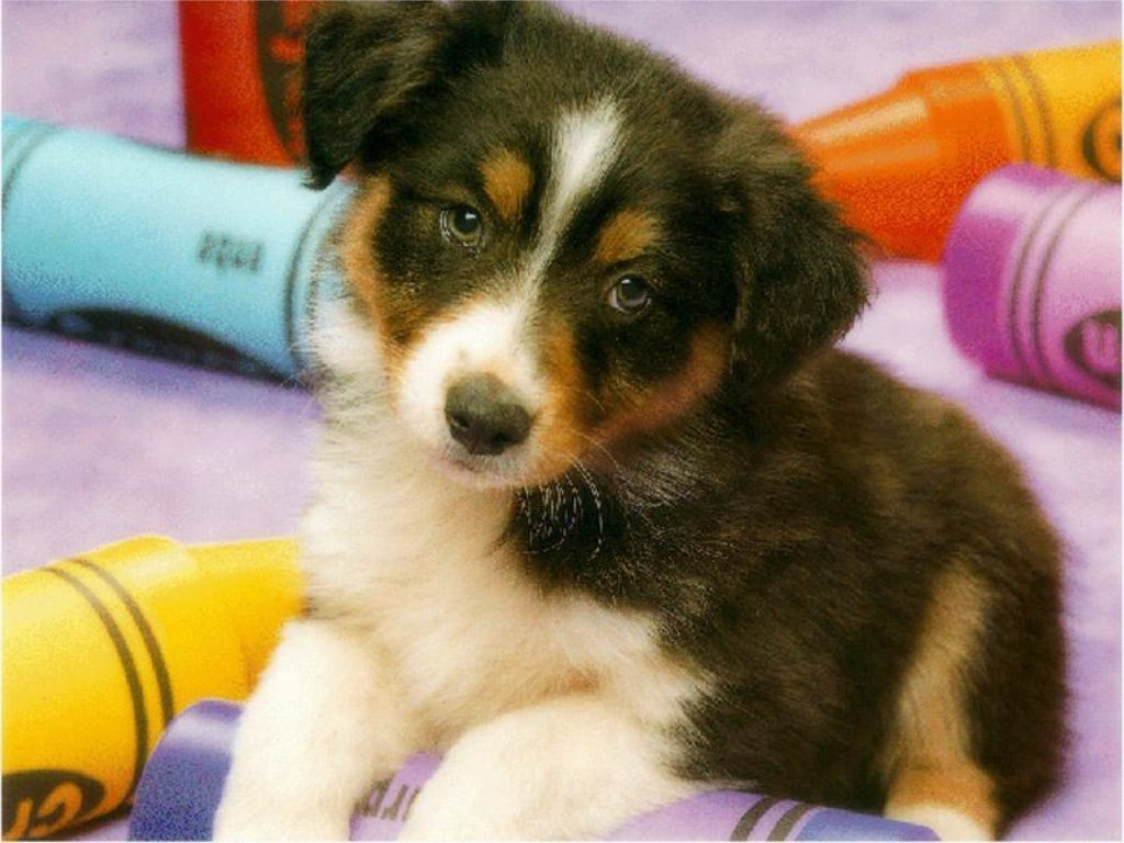 Dogs & Puppies 11