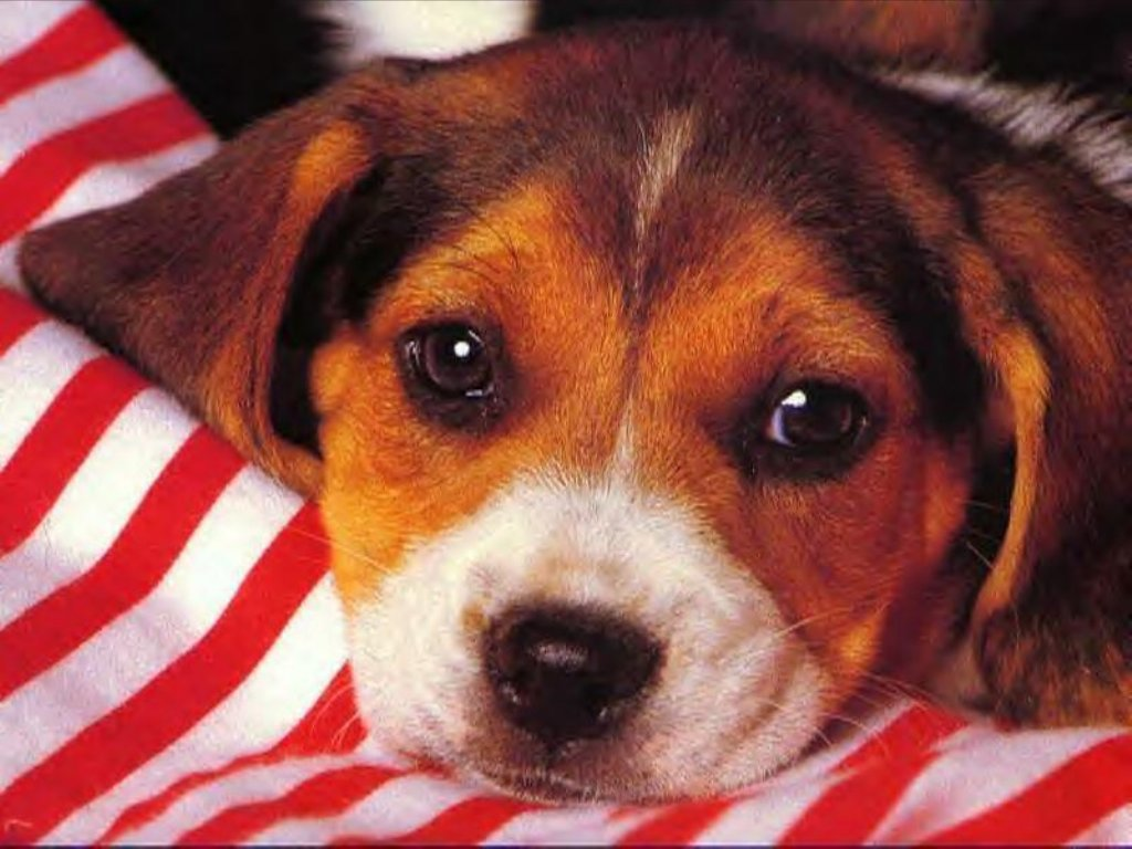 Dogs & Puppies 15