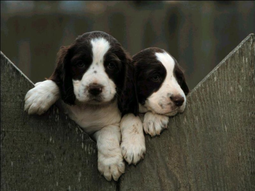 Dogs & Puppies 19