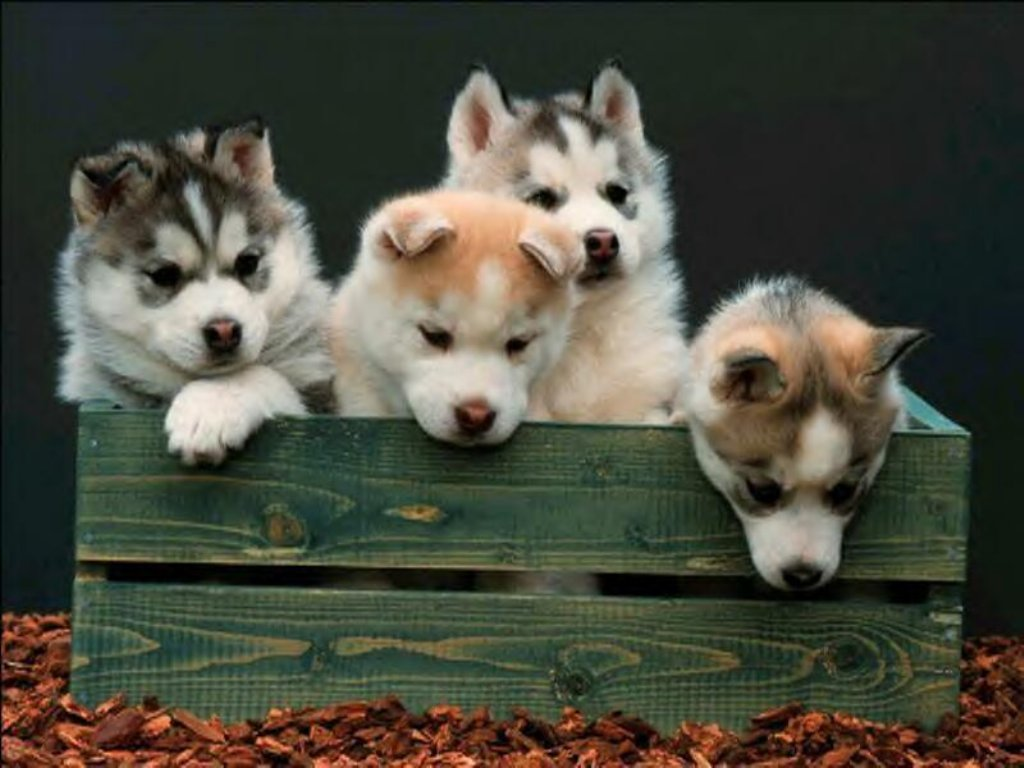 Dogs & Puppies 20
