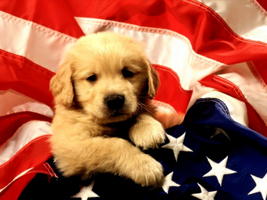Dogs & Puppies 24