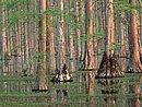 Cypress Trees South Carolina