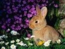 Bunnies 07