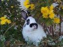 Bunnies 10