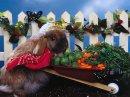 Bunnies 11